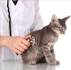 Ветеринарные клиники в Мысе Шмидта